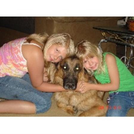 how to become german shepherd breeder