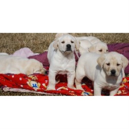 Small Dog Breeders In New Brunswick