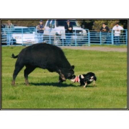 Shale Ridge Farm Border Collie Breeder In Otego New York