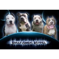 Bully Magic Kennel
