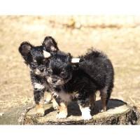 California Natural Rearing Dog Breeders