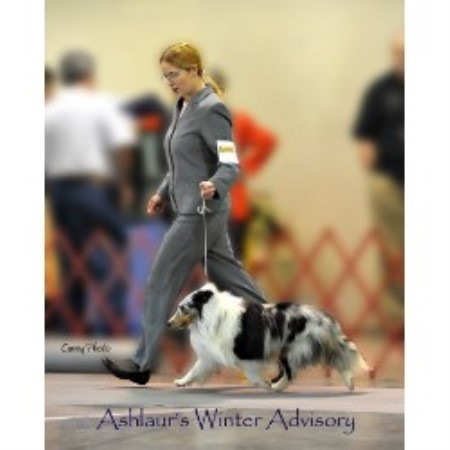 Service Dog Training West Virginia