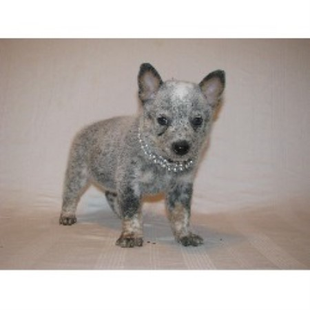 Australian Cattle Dog breedering kennel in Canton