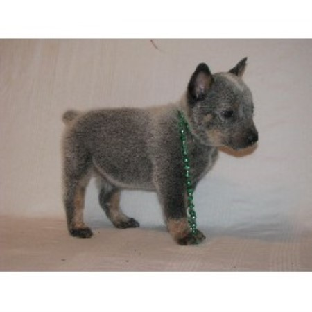 Blue Heeler,Red Heeler breeder in Canton, Texas