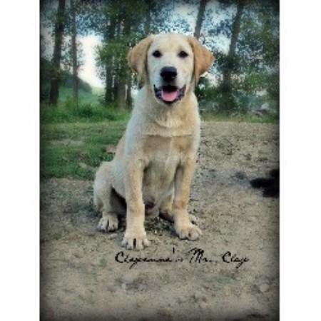 Dog Kennel Hillsboro Oregon