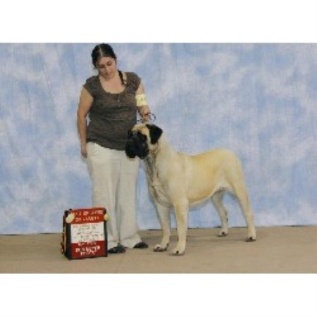 Mastiff breeder Grand Junction 21100