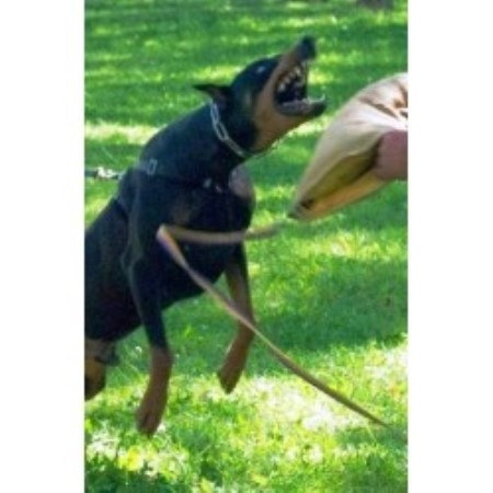 Doberman Pinscher breeder Layton 21161