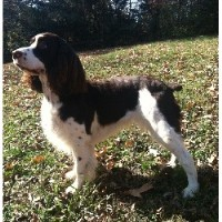 Small Dog Breeders In Middle Tennessee