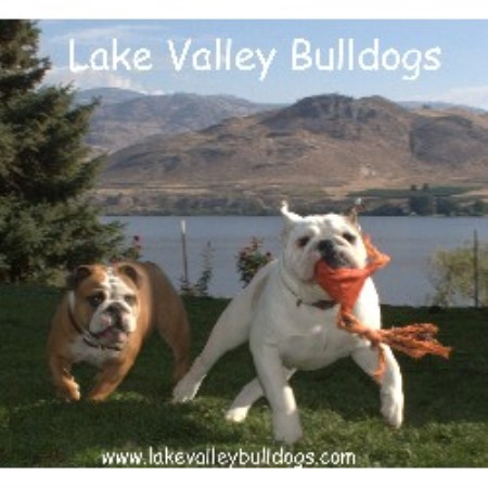 Lake Valley Bulldogs, English Bulldog Breeder in Oroville ...