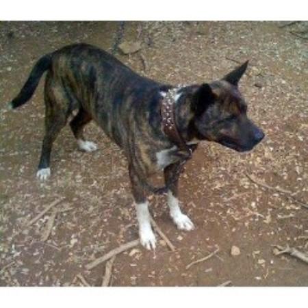 Dog Grooming Columbia South Carolina
