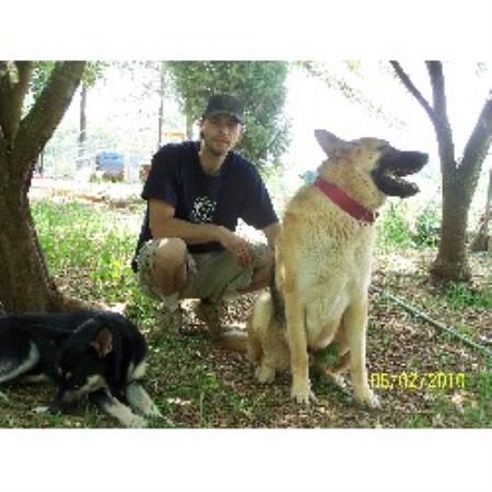 Earnwel S German Shepherd Dog Stud In Salisbury North Carolina