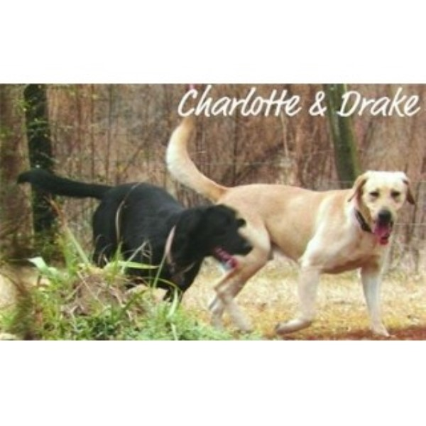 Puppies in Louisiana, Labrador Retriever Breeder in Amite