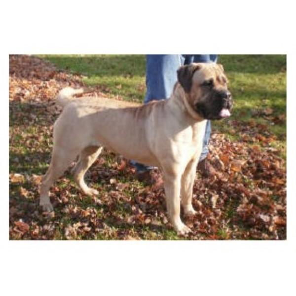 Protection Dog Training Wisconsin