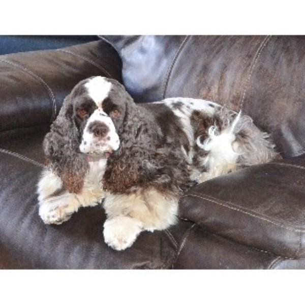 Council Bluffs Iowa Dog Rescue