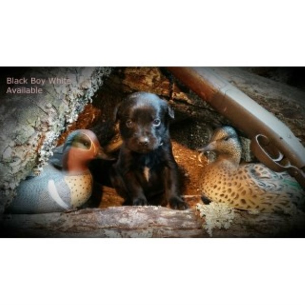 how to become a dog breeder in arkansas
