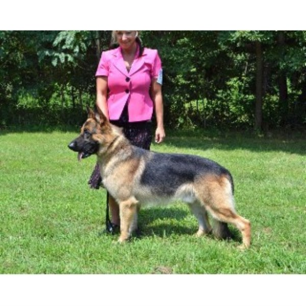 German Shepherd Dog breeder in Ohio