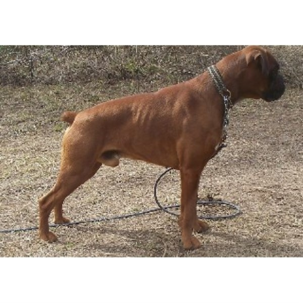 Boxer breeder Spirit Lake 22304