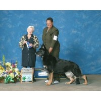 Marcato German Shepherds