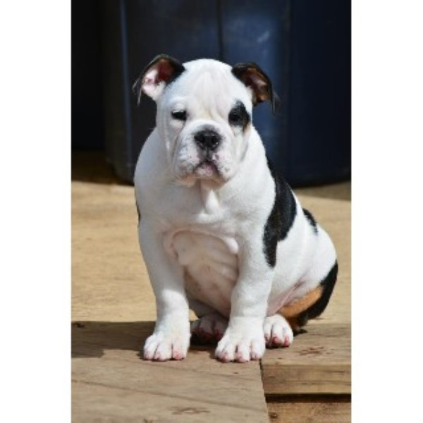 how to become a dog breeder in ontario
