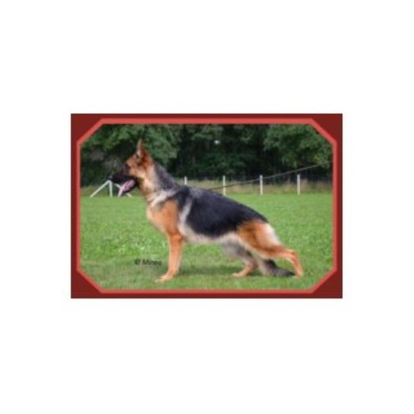Wolfgang Expert Dog Training German Shepherd Dog Breeder