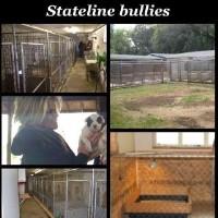 American Pit Bull Terrier Breeders in Illinois