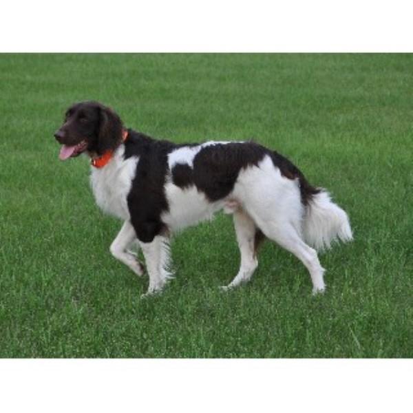 Bernese Mountain Dog Rescue Nebraska