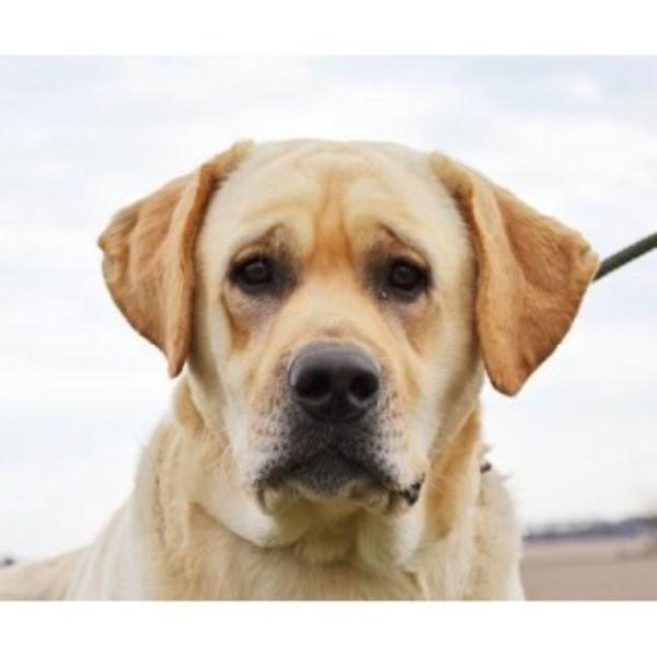 Small Dog Breeders In Utah