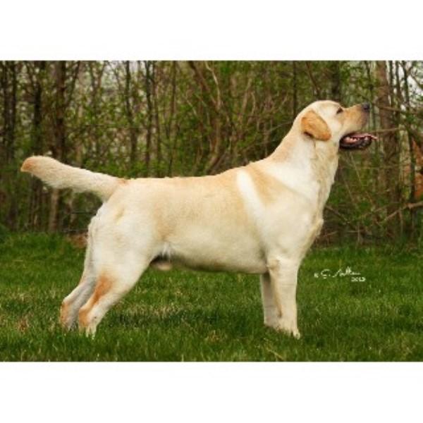 Dog Kennels For Sale Thunder Bay