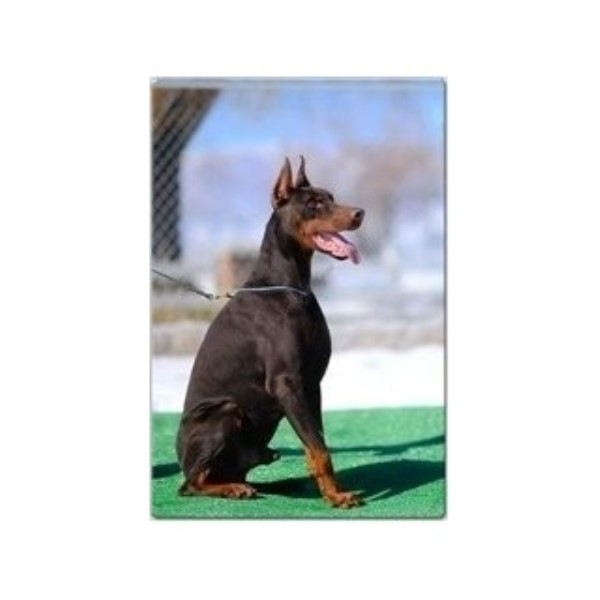 Doberman Pinscher breeder Byron 24893