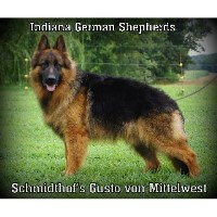 Indiana German Shepherds