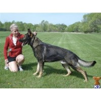 Teufel Hunden German Shepherds