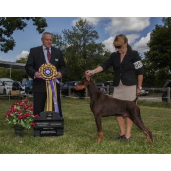 Doberman Pinscher breeder Stoney Creek 23588