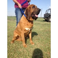 Lonestar Bloodhounds
