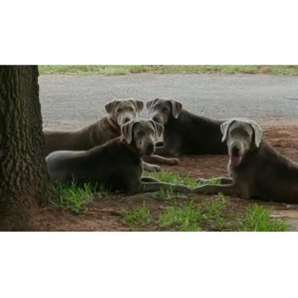 Farm Dog Rescue Manitoba