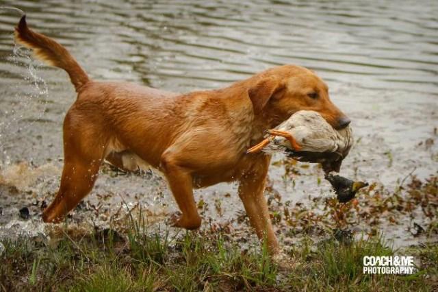 Bird Dog Rescue Oklahoma