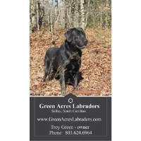 Green Acres Labradors