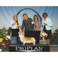 Pembroke Welsh Corgi Breeders In California