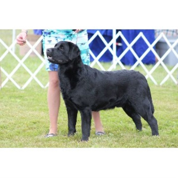 Labrador Retriever breeder Bangor 22328