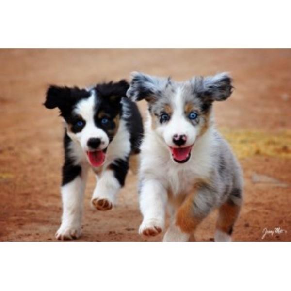 Dog Rescue San Tan Valley Az