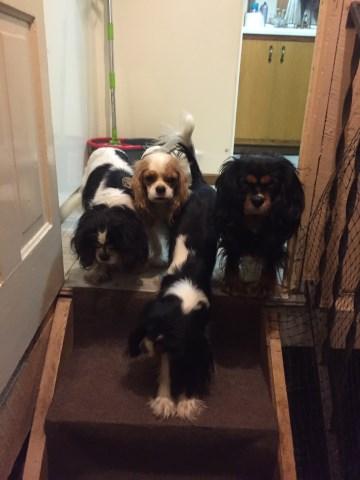 4 Ever Best Friends French Bulldog Breeder In Suring Wisconsin