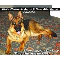 Tori Alle Sterne German Shepherds