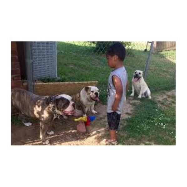 The Brave Family international pets re-homers, English ...