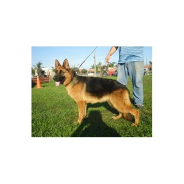 Dog Obedience Training West Tennessee