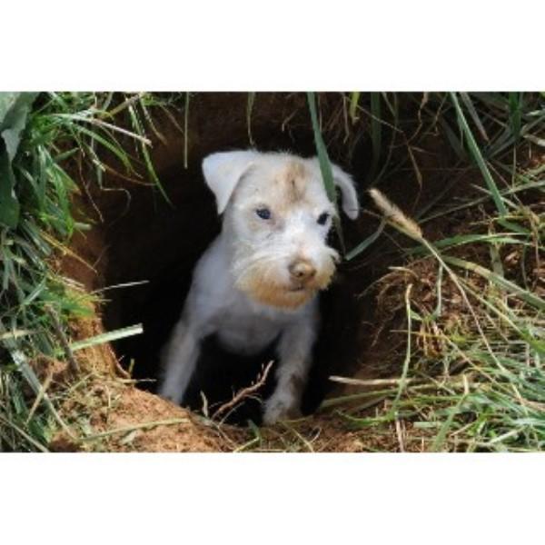 Rhumbline Terriers, Jack Russell Terrier Breeder in Newport