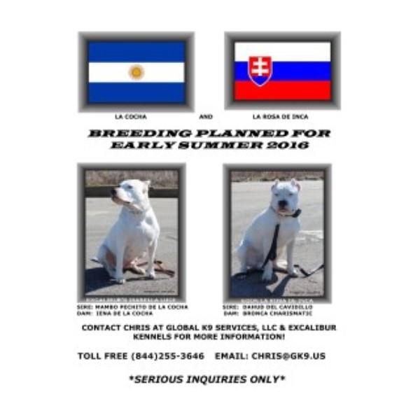 Excalibur Kennels, Dogo Argentino Breeder in Birmingham, Alabama