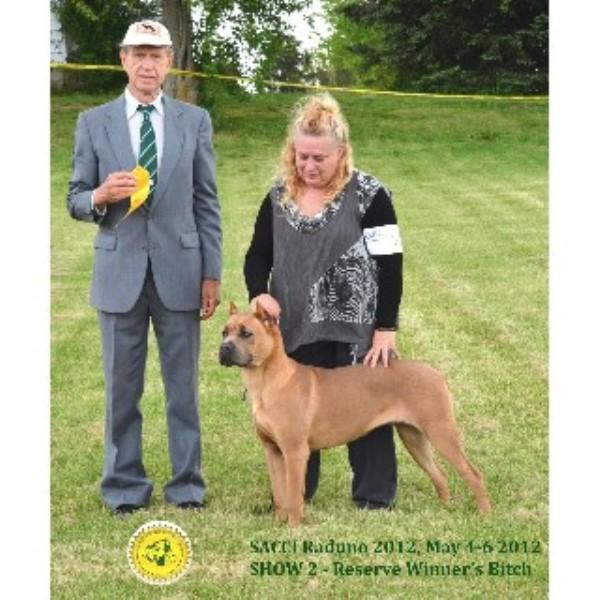Boondockdogs Cane Corso Breeder In Smithfield Illinois