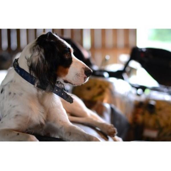 Northeast Ohio Small Dog Rescue