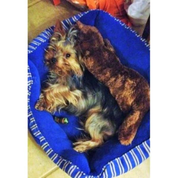 Dogs For Sale In Shreveport La