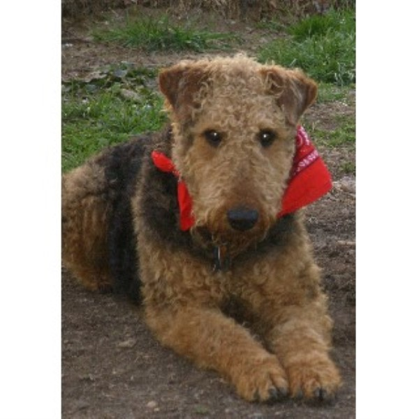 AIREDALE ACRES