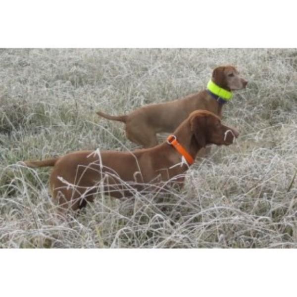 Dog Kennel For Sale Sacramento